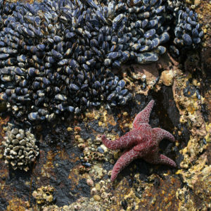 mussels and star fish